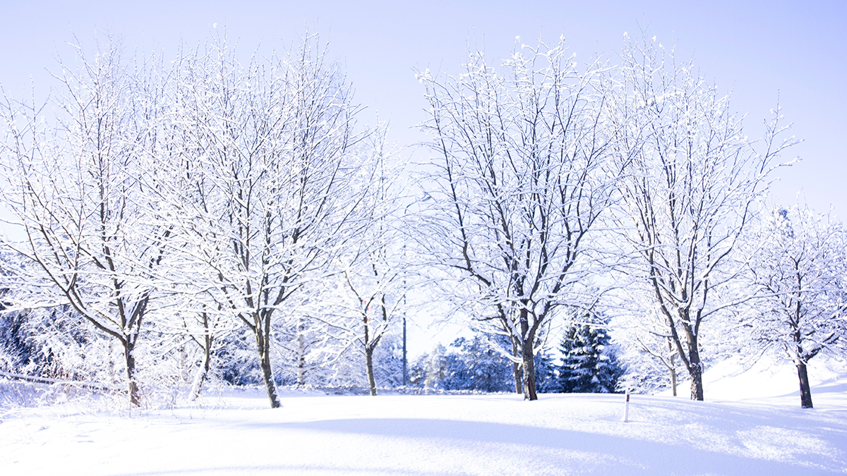A landscape of snow covered trees.