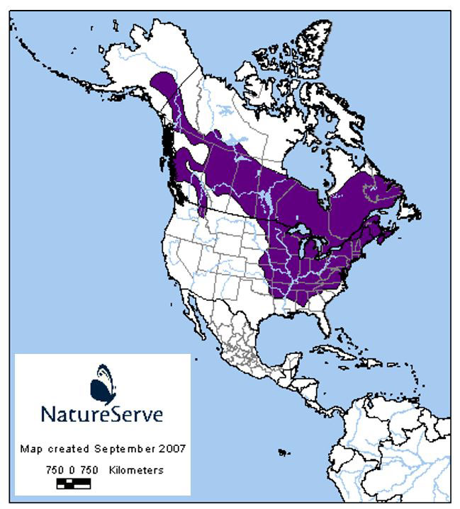Range map for Groundhog in North America