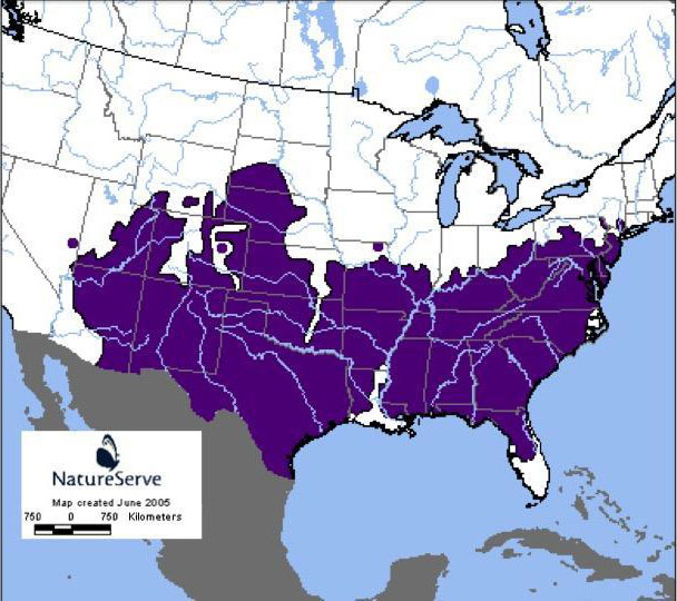 Eastern Fence Lizard Range Map